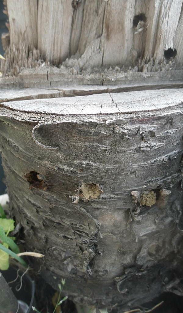 Nisthilfen für Bienen – auch auf dem Balkon  Portionsdiät